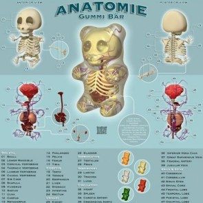 Anatomy of a Gummi Bear